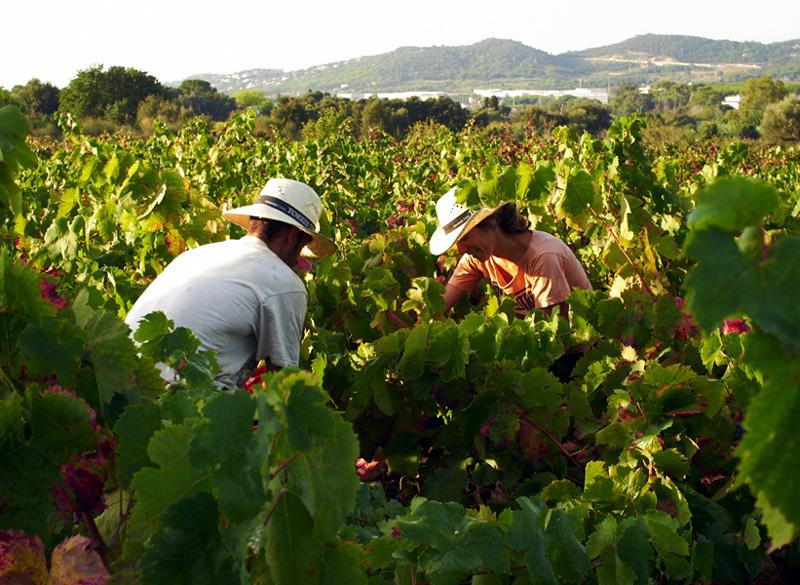 Tot el cap de setmana es dedica a activitats relacionades amb el vi i la seva elaboració. (Foto: Ajuntament de Calonge i Sant Antoni).