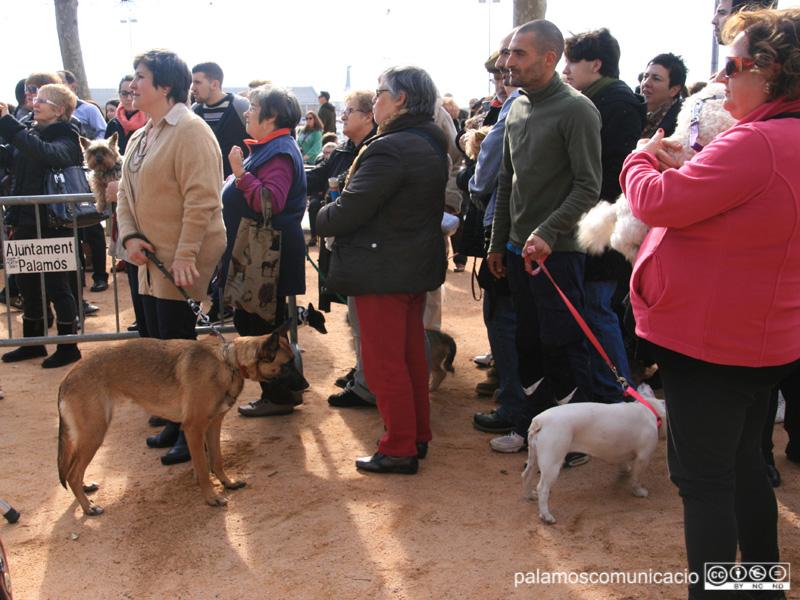Un any més, l'acte més destacat serà la benedicció dels animals.