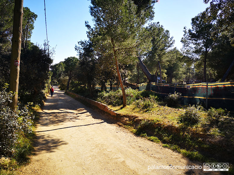 El vial de la pineda d'en Gori, aquest matí.