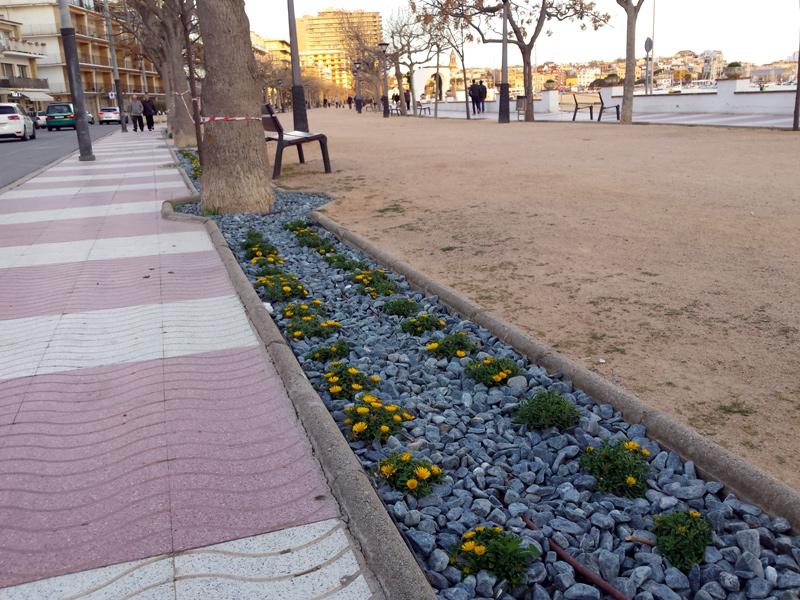 Nous parterres amb flors al passeig del Mar. (Foto: Ajuntament de Palamós).