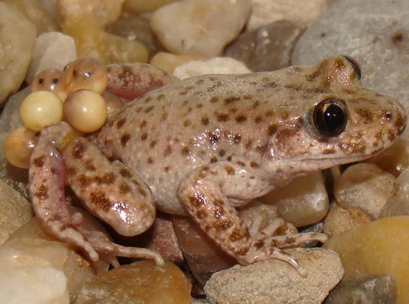 L'acitivat permetrà conèixer els amfibis que viuen al nostre territori.