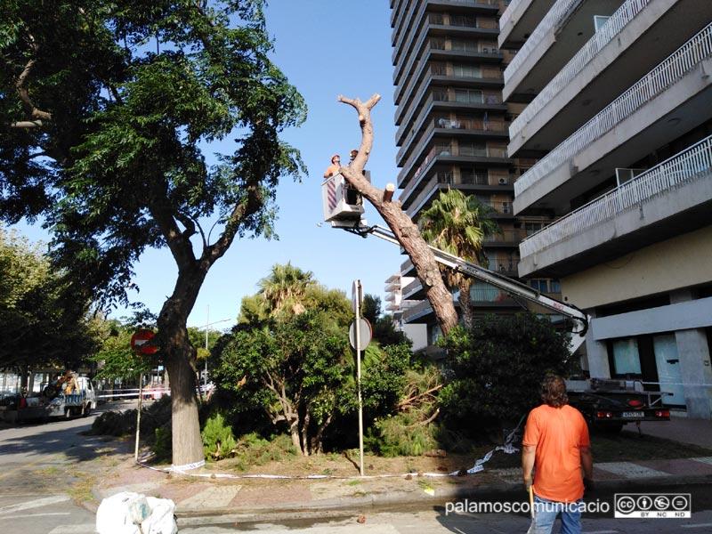 Tasques de retirada dels arbres afectats, aquest matí al passeig del Mar.
