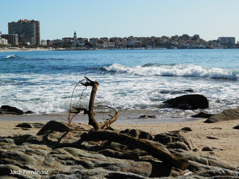 Cel serè, lleugera mar de fons i un tronc arrossegat per la llevantada del 22-23 d'octubre, el passat dimecres 6 de novembre al matí. (Foto: tempspala