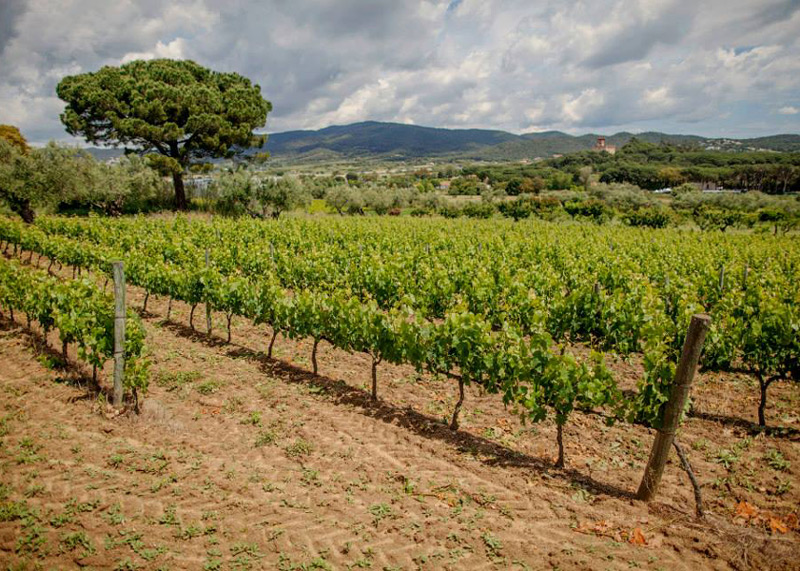 El celler del Mas Eugeni, un dels productors del vi de pagès a Calonge.