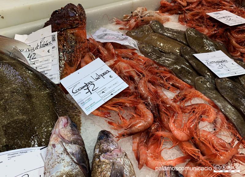 Gamba mitjana de Palamós a 72€ el kilo, aquest matí al Mercat de Palamós.