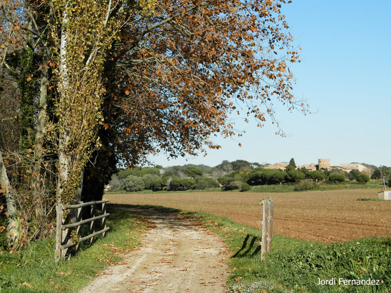 Temps assolellat i paisatge de tardor a la Via Verda, el passat dilluns 25 de novembre. (Foto: J. Fernández tempspalamos.blogspot.com).