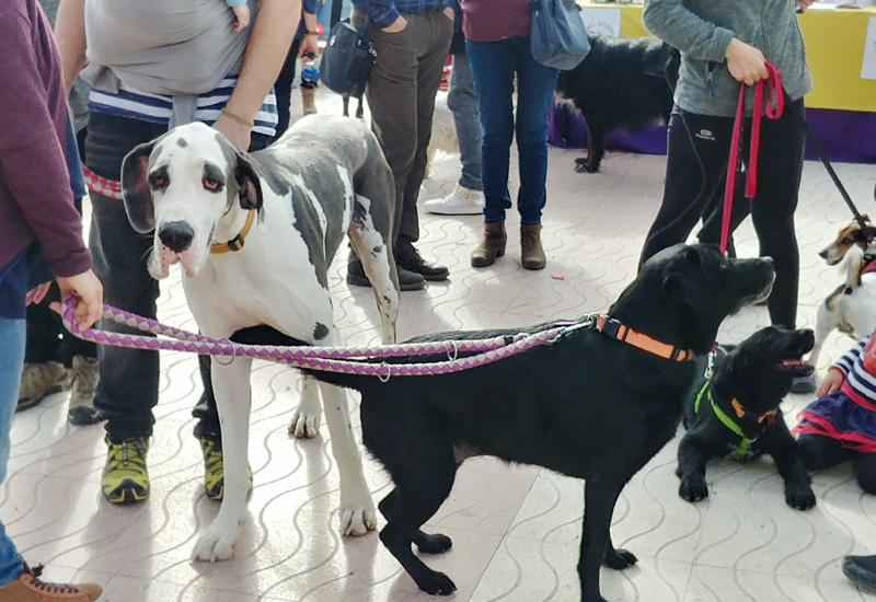 L'acció està adreçada als propietaris de gossos.