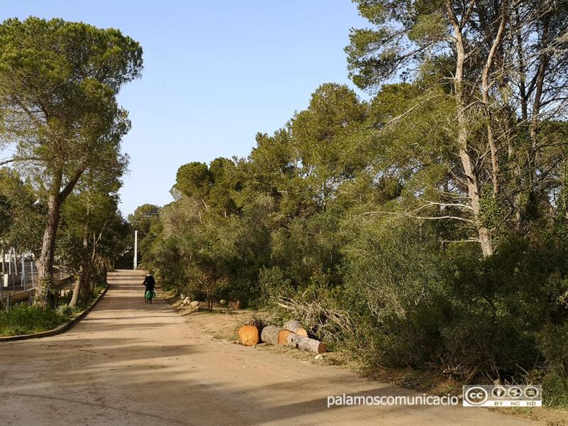 A la dreta, la franja de camí objecte de la neteja i tala, a la zona de la Pineda d'en Gori