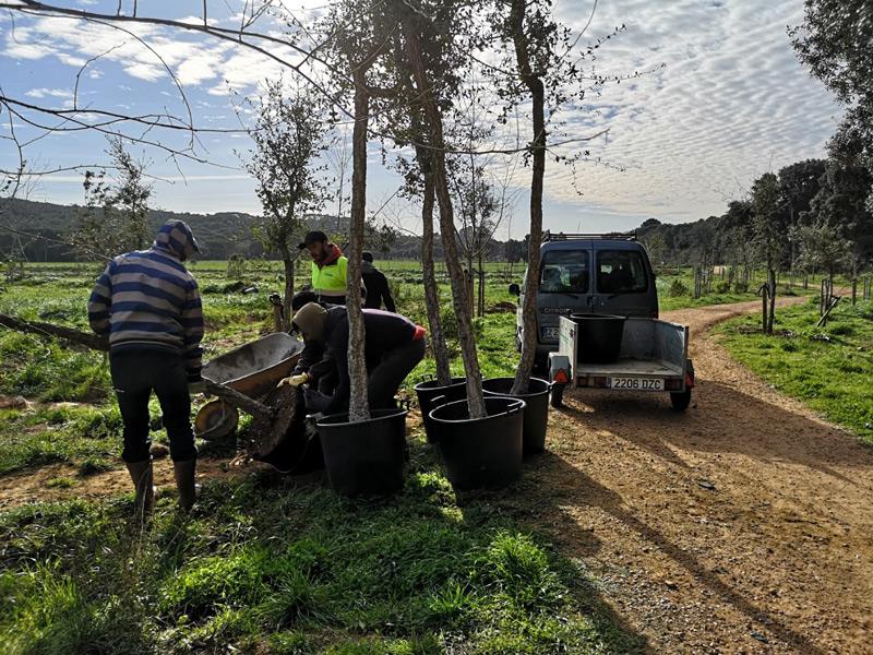 Els arbres que es planten són suros, pins i àlbers, exemplars autòctons d'aquest espai. (Foto: Ajuntament de Palamós).