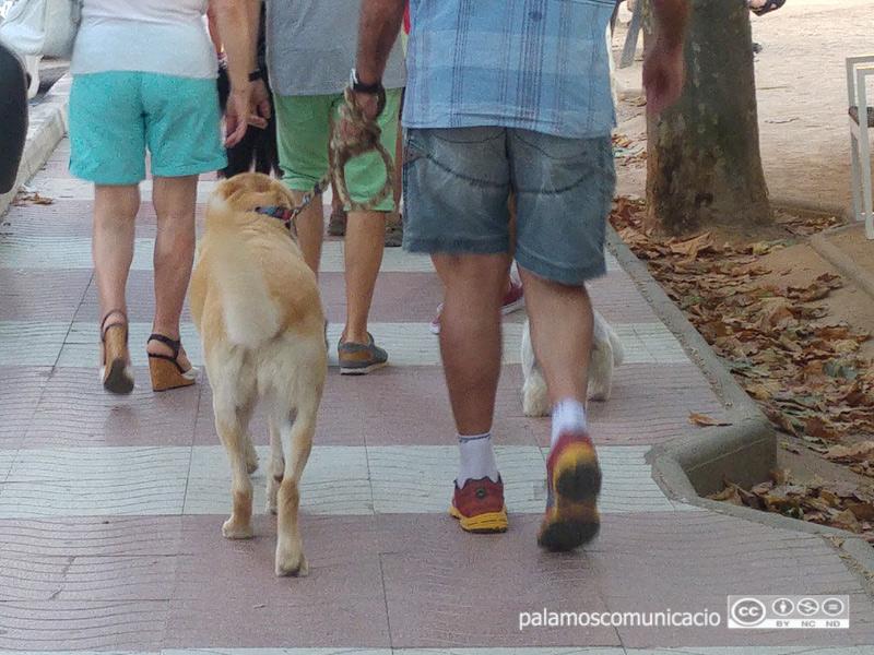 A banda, només podrà a treure a passejar el gos una única persona.