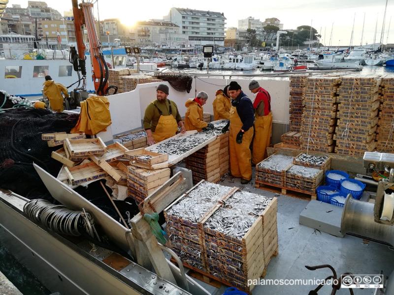 Pescadors descarregant caixes de peix blau al port de Palamós.