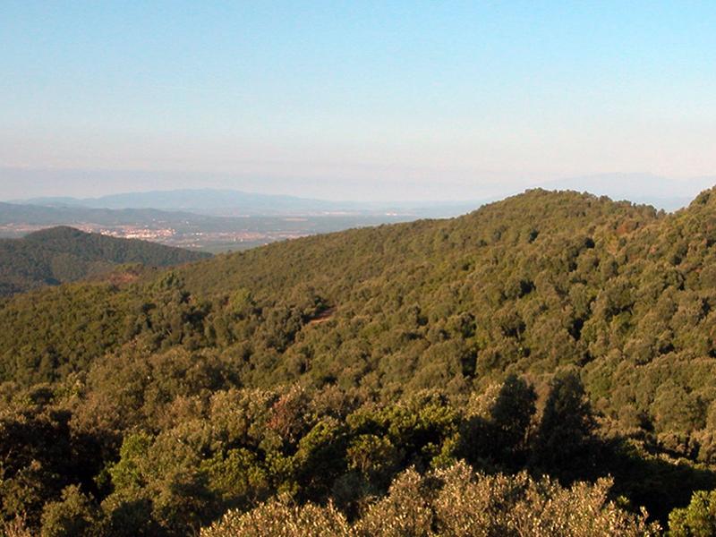 El Consorci gestiona i conserva l'Espai d'Interès Natural del massís de les Gavarres. (Foto: Diputació de Girona).