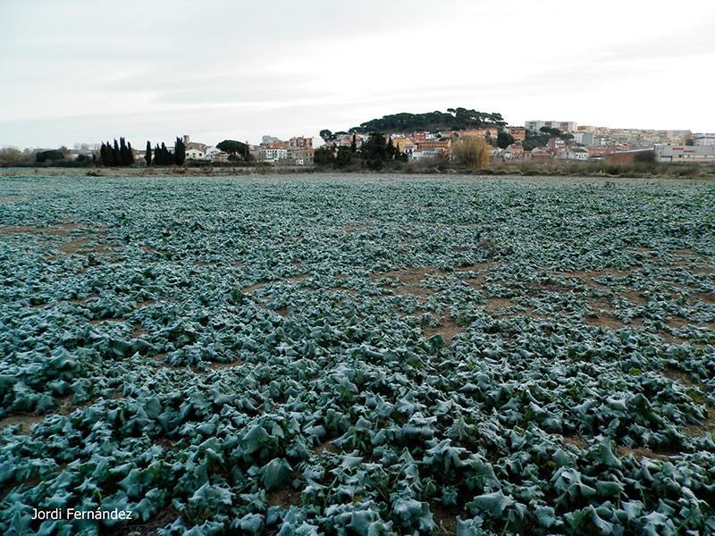 Camps gebrats la passada setmana a Palamós. (Foto: tempspalamos.blogspot.com)