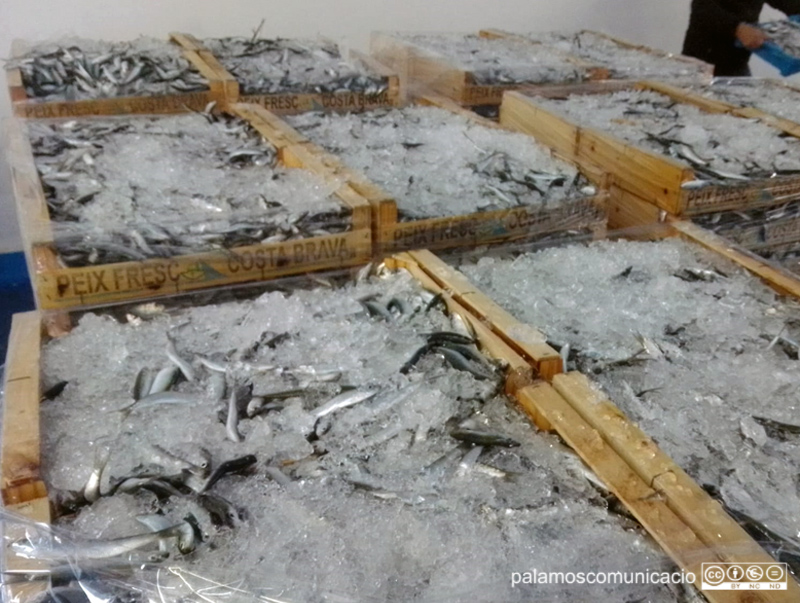 Caixes de peix blau, aquest matí a la Llotja de Palamós.