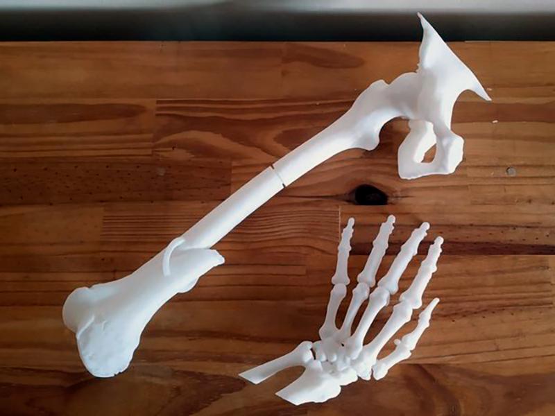 Ossos impresos amb la impressora 3D. (Foto: SSIBE).