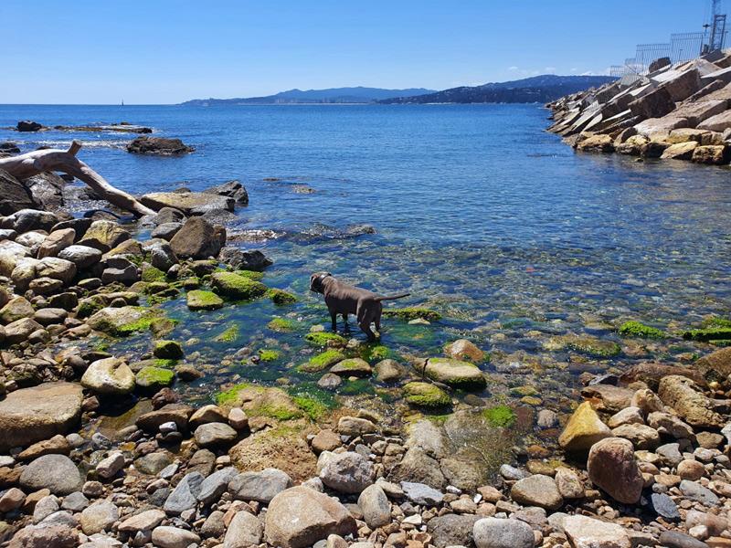 Un gos remullant-se a la cala de Pere Grau. (Foto: A. P).