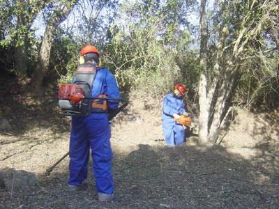 Operaris desbrossant bosc a Calonge