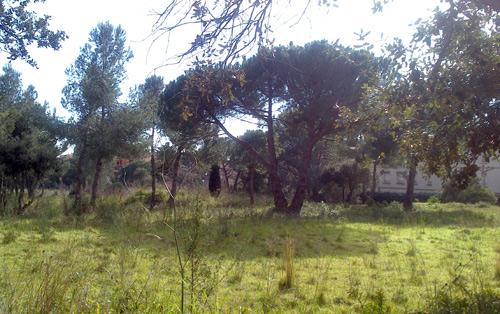 Imatge de la parcel·la urbanitzable de l'espai de la Pineda d'En Gori.